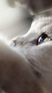 901-cats-l